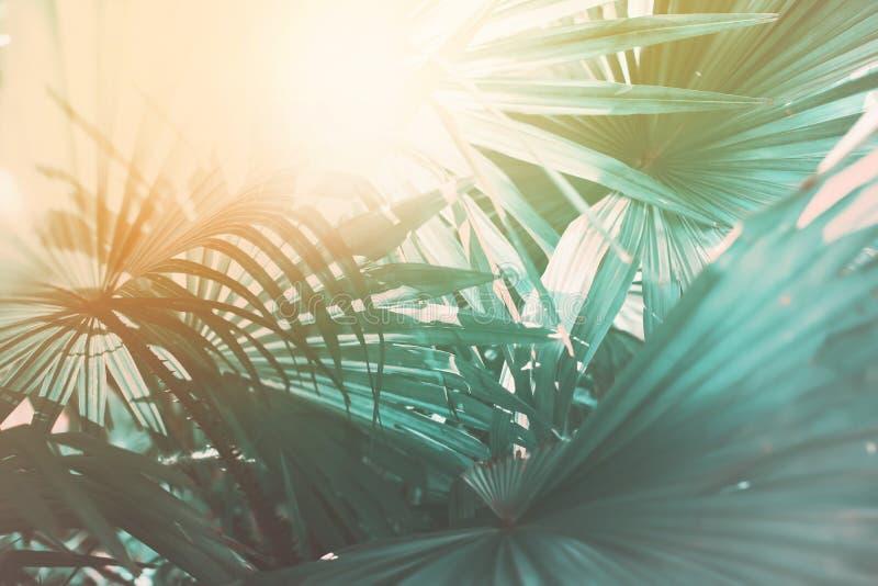 Morgonljus faller till och med palmbladet Exotiskt tropiskt arkivfoto