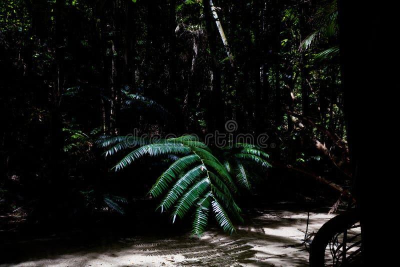 Morgonljus i den härliga djungelträdgården, sol skiner rätt på palmblad, fraserön, Australien fotografering för bildbyråer