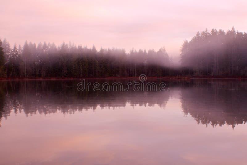 Morgonmist över sjön royaltyfria bilder