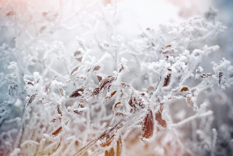 Morgonmist - fördunkla på den djupfrysta växten, rimfrost på sidor arkivbild