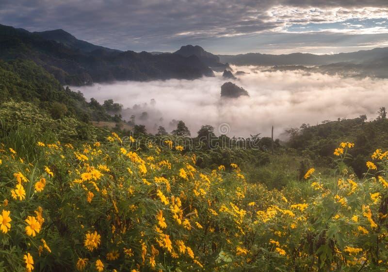 Morgonmist med det berglagerPayao landskapet, Thailand royaltyfria bilder