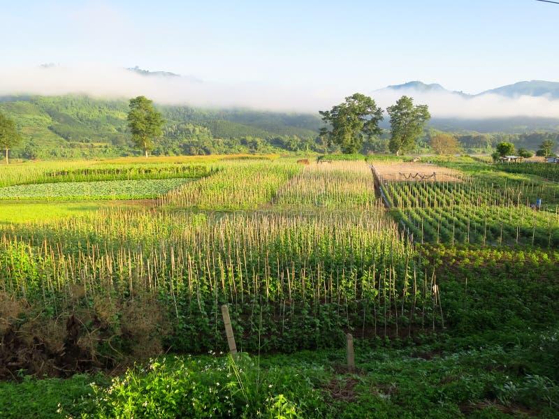 Morgonplats av det härliga skördfältet, liten koja, berg, blått royaltyfri fotografi