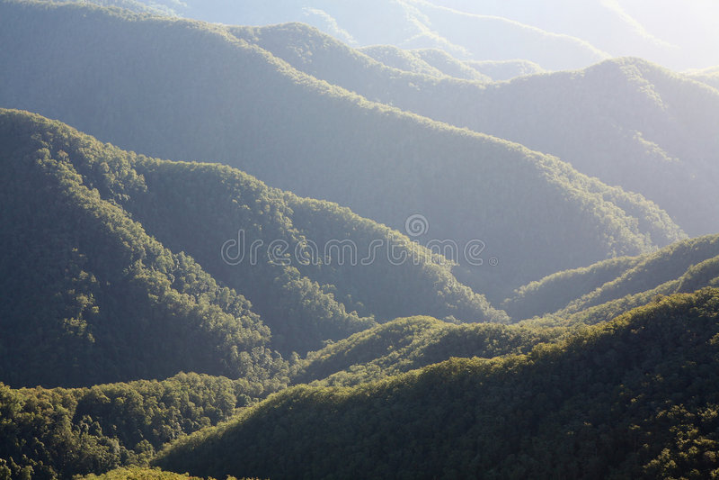 morgonrainforest arkivfoton