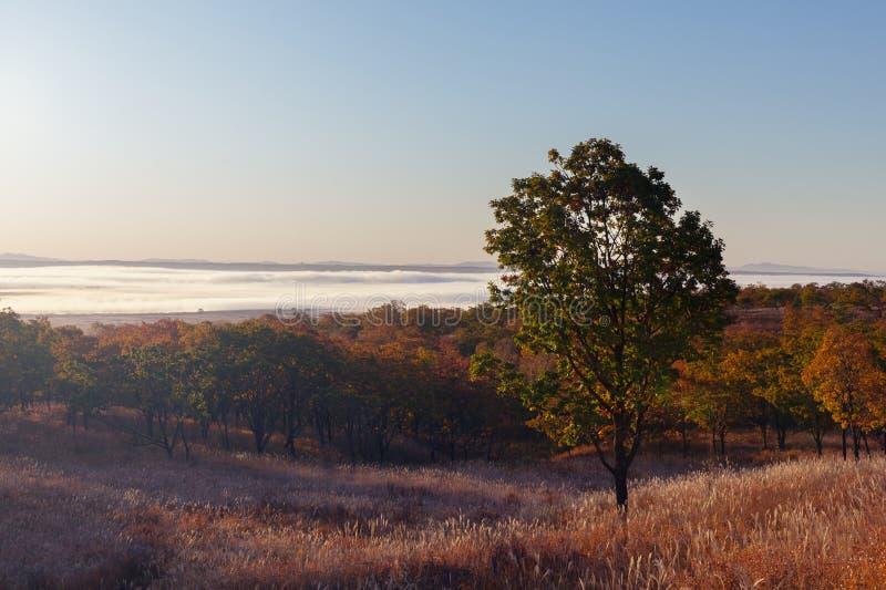 Morgonsikt av dalen som täckas med dimma i höst fotografering för bildbyråer