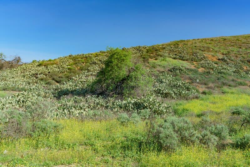 Morgonsikt av ett lantligt berg i Pomona område fotografering för bildbyråer