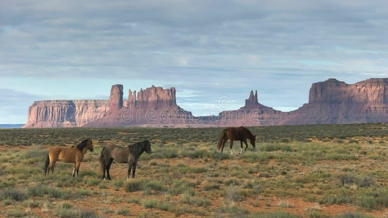 Morgonskott av tre hästar som betar på monumentdalen i utah arkivbild