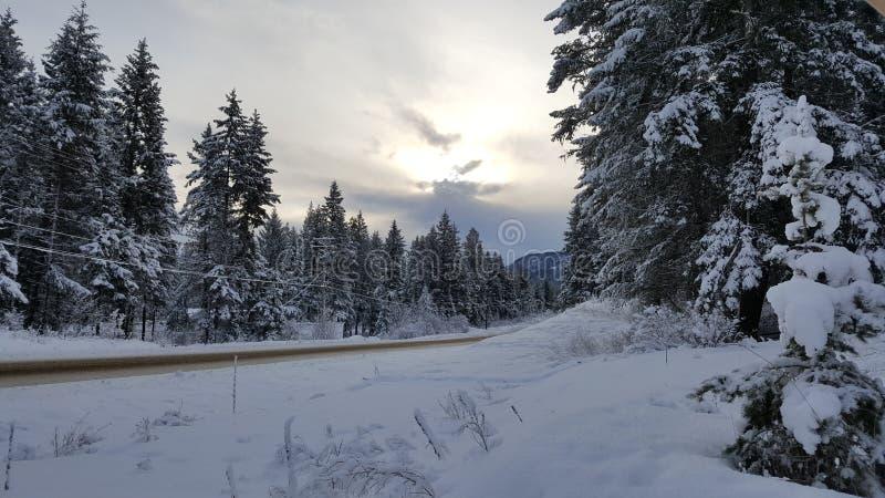 Morgonsol och snö royaltyfri fotografi