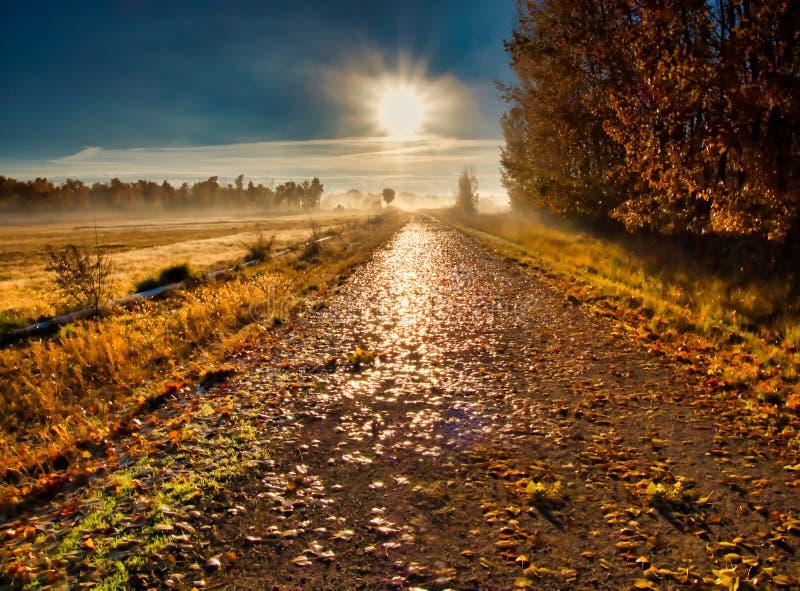 Morgonsol på våta Autumn Leaves fotografering för bildbyråer