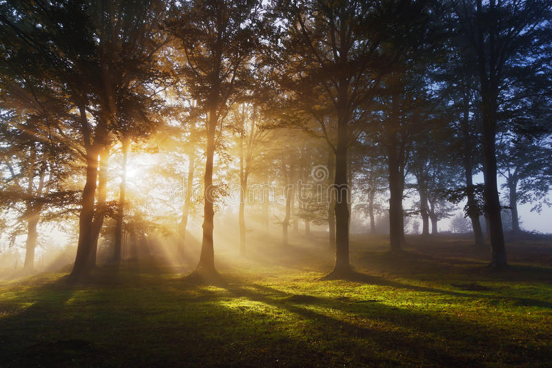 Morgonsolstrålar på skog royaltyfria foton