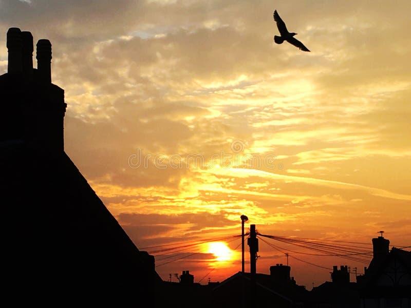 Morgonsoluppgång i Liverpool UK royaltyfri fotografi