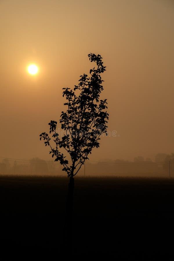 Morgonsoluppgång som visar konturn av träd Poperinge Belgien arkivfoton