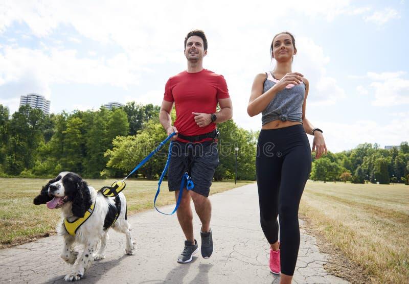 Morgonspring med hunden och partnern royaltyfria foton