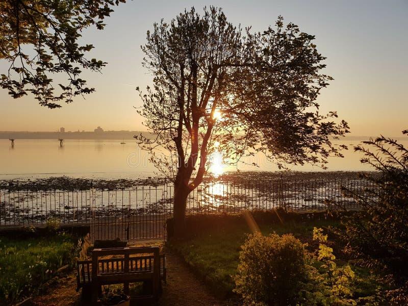 Morgonträd fotografering för bildbyråer