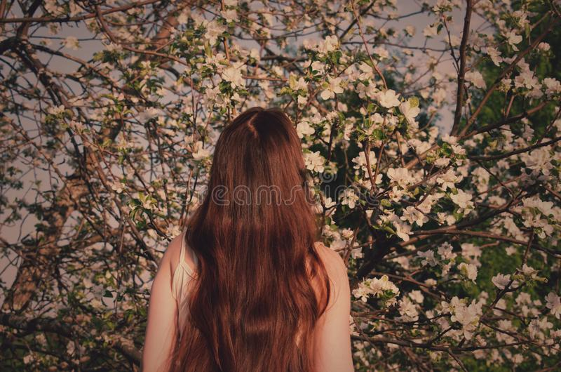 Mori forest girl with brown hair on the background of a blooming apple tree royalty free stock images