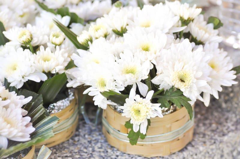 Morifolium Ramat de chrysanthème ou fleur de chrysanthème dans le vase images stock