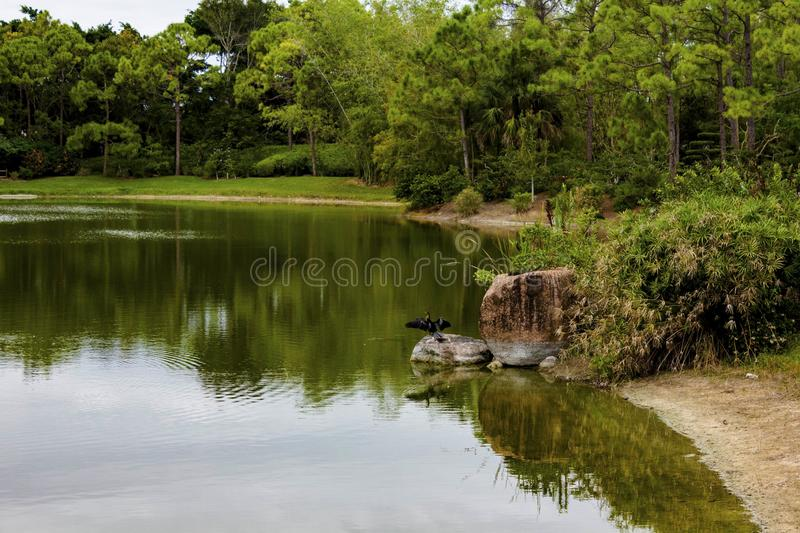 Morikami Museum and Japanese Garden Delray Beach Florida. The Morikami Museum and Japanese Gardens were established in 1977. It is a recognized center for royalty free stock photography