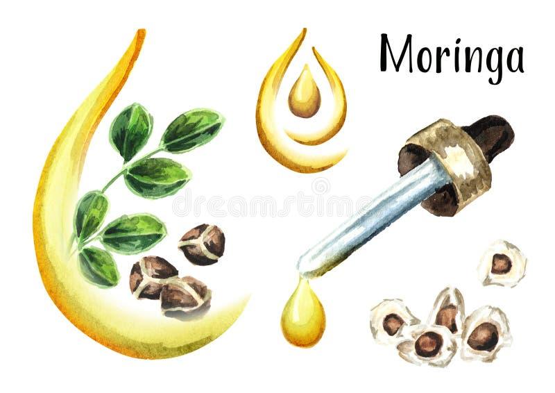 Moringa ή Behen σύνολο πετρελαίου Συρμένη χέρι απεικόνιση Watercolor που απομονώνεται στο άσπρο υπόβαθρο στοκ φωτογραφία