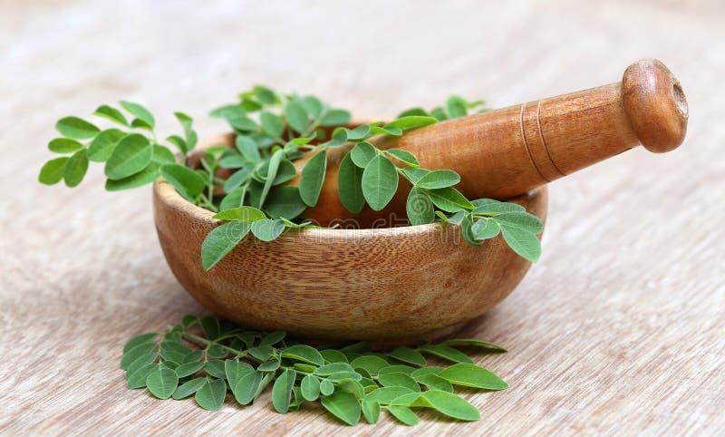 Moringa φύλλα και γουδοχέρι κονιάματος στοκ εικόνα