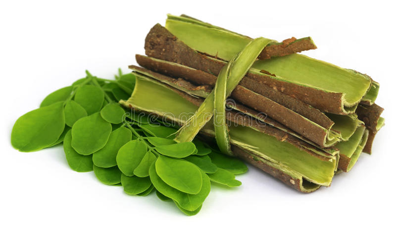 Moringa φύλλα και φλοιός στοκ φωτογραφία με δικαίωμα ελεύθερης χρήσης