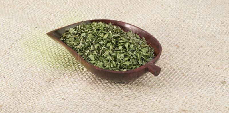 Moringa стоковая фотография