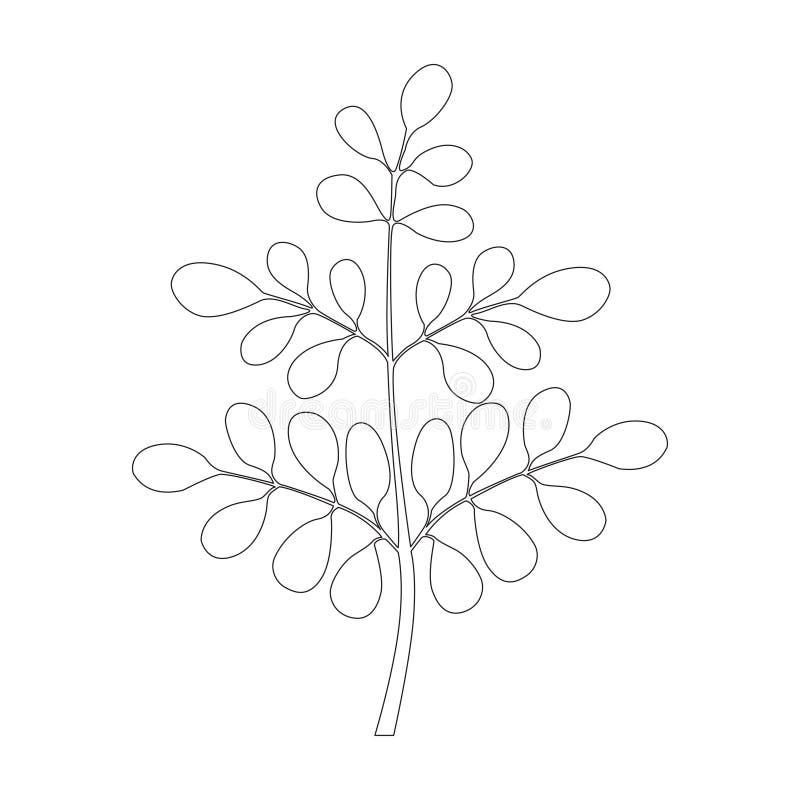 Moringa-Baum, ununterbrochene Linie stock abbildung