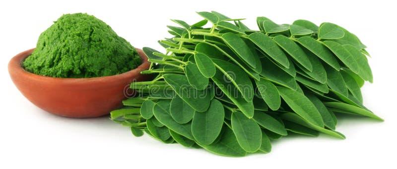 Moringa-Blätter mit Paste stockfotografie