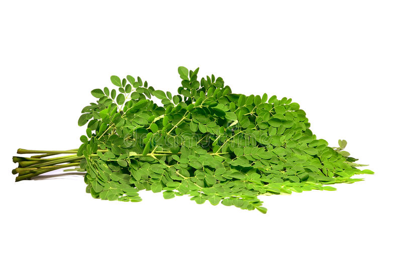 Moringa Branches Stock Images