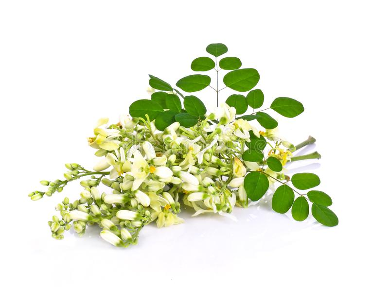 Moringa flowers on a white background stock photos