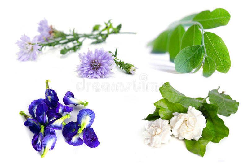 Moringa installatieblad, jasmijnbloem, vlindererwt, blauwe erwt en royalty-vrije stock foto