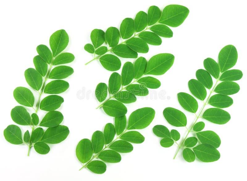 Moringa jadalni liść zdjęcie stock