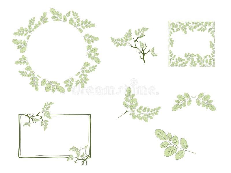 Moringa Leaf and Frame Design Set stock illustration