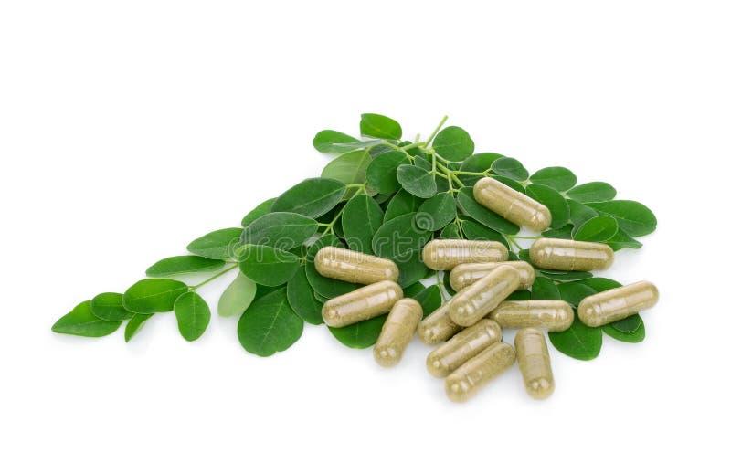 Moringa leaves with capsules isolated on white. Background royalty free stock image