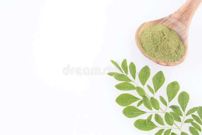 Moringa nutritional plant - Moringa oleifera. Moringa the species with the most nutritional value royalty free stock image