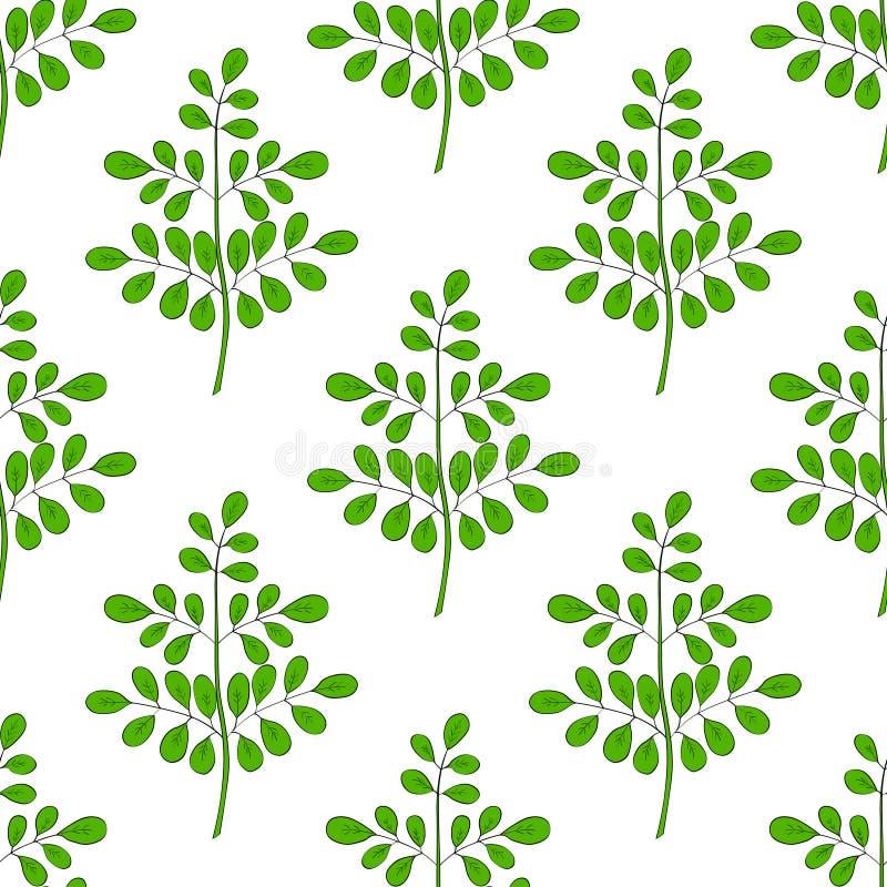 Moringa oleifera στο χρώμα, άνευ ραφής 1 στοκ φωτογραφία με δικαίωμα ελεύθερης χρήσης