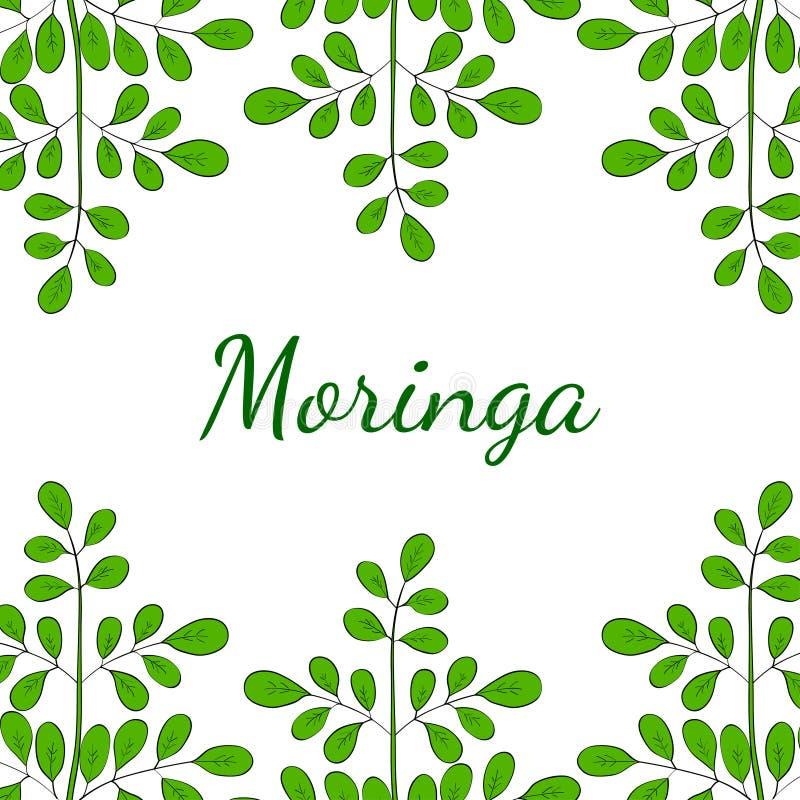 Moringa oleifera, σύνορα 1 στο χρώμα στοκ φωτογραφία με δικαίωμα ελεύθερης χρήσης