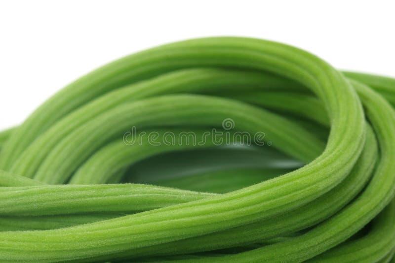 Moringa oleifera photo libre de droits