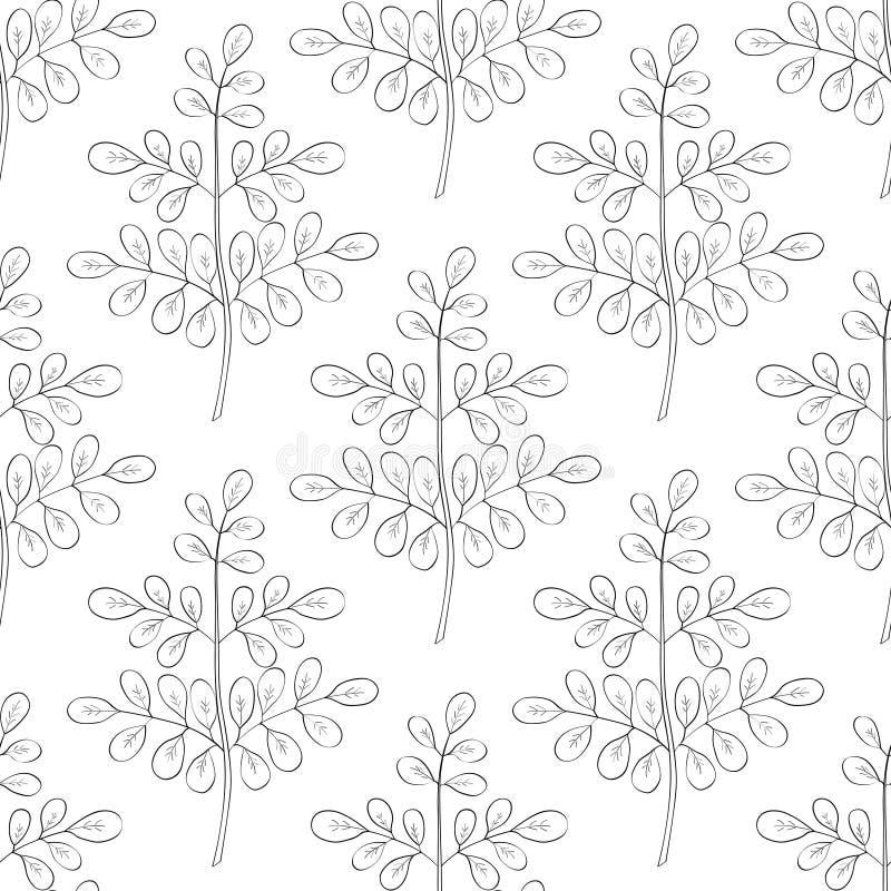 Moringa oleifera, seamless 2 stock illustration