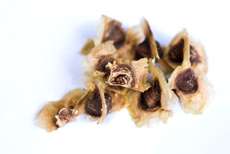 Moringa oleifera sidor och blomma arkivbilder