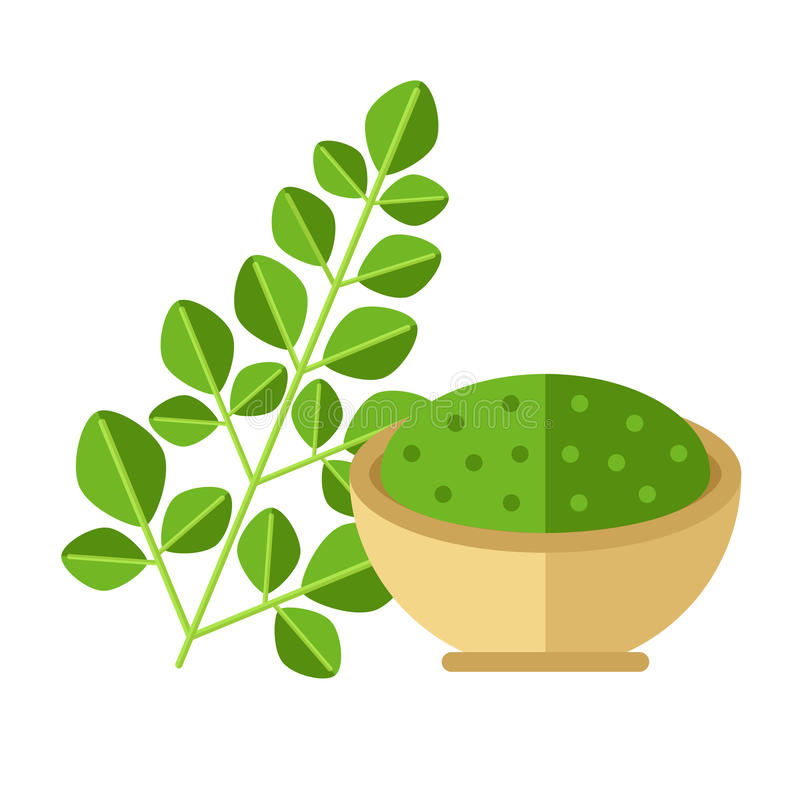 Moringa plant with leaves and seed powder. Vector illustration. royalty free illustration