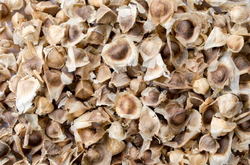Moringa sème sec photo stock