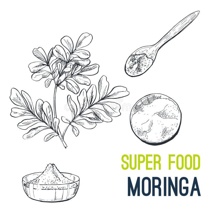 Moringa Schizzo disegnato a mano dell'alimento eccellente royalty illustrazione gratis