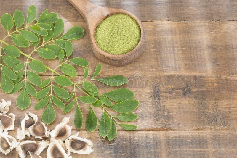 Moringa nutritional plant - Moringa oleifera. Moringa the species with the most nutritional value royalty free stock photos