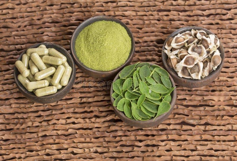 Moringa nutritional plant - Moringa oleifera. Moringa the species with the most nutritional value stock photography