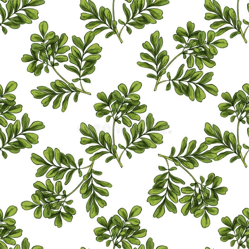 Moringa Teste padrão botânico sem emenda ilustração do vetor