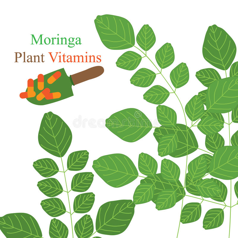 Moringa växtvitaminer stock illustrationer