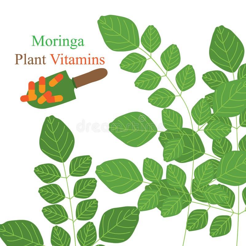 Moringa växtvitaminer stock illustrationer