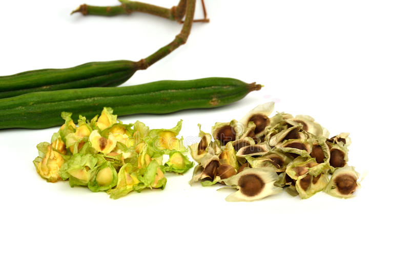 Moringa van Thailand stock fotografie