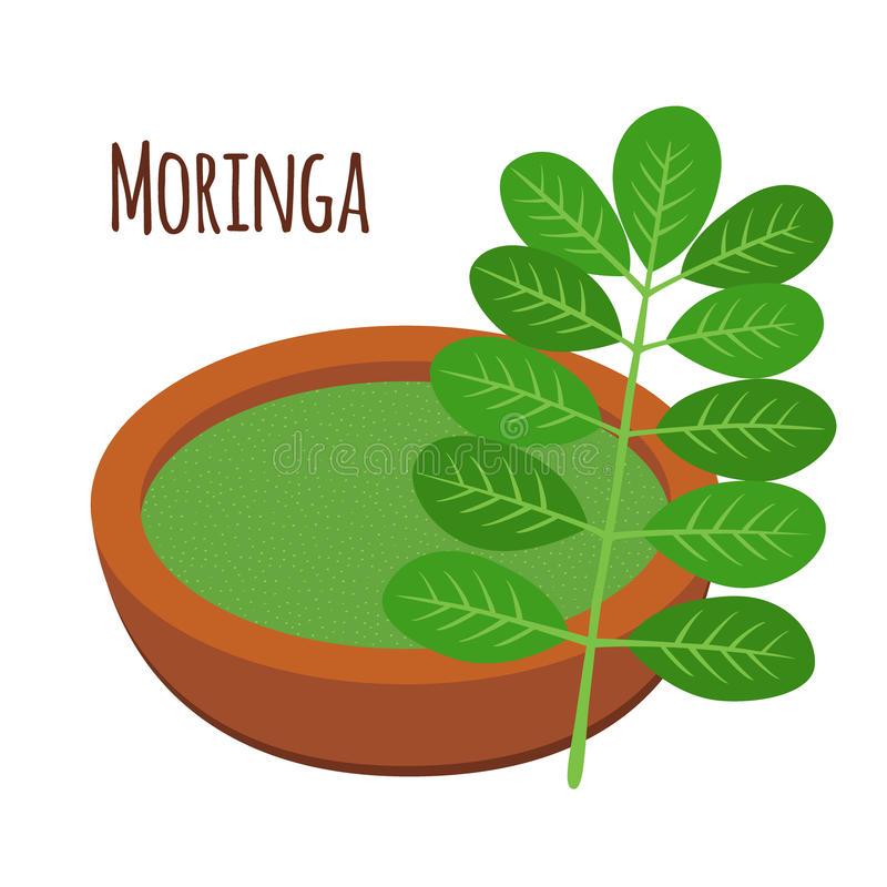 Moringa, vegetarian superfood. Healthy nutrition. Herb, vegetable, powder, tree in flowerpot. Cartoon flat vector style vector illustration