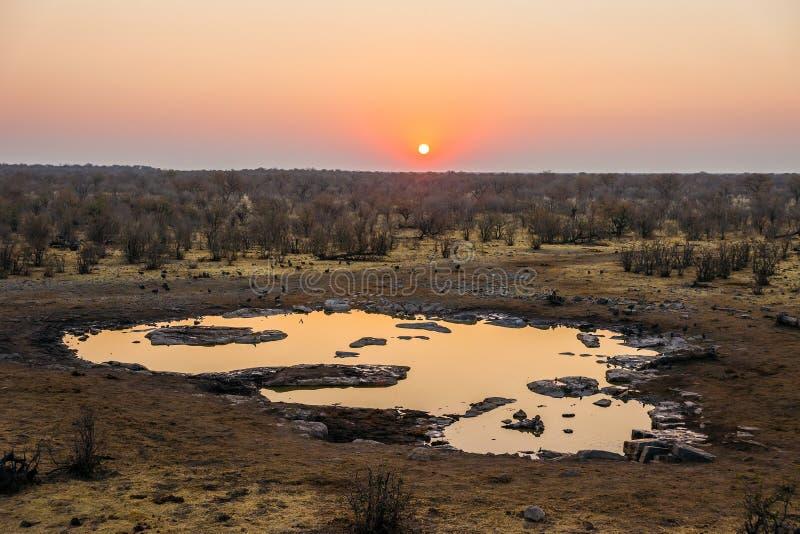 Moringa-waterhole in Nationalpark Etosha bei Sonnenuntergang lizenzfreie stockbilder