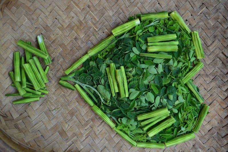 Moringo-Baum-Blätter und Trommelstockfrüchte von diesem pflanzt lizenzfreies stockbild